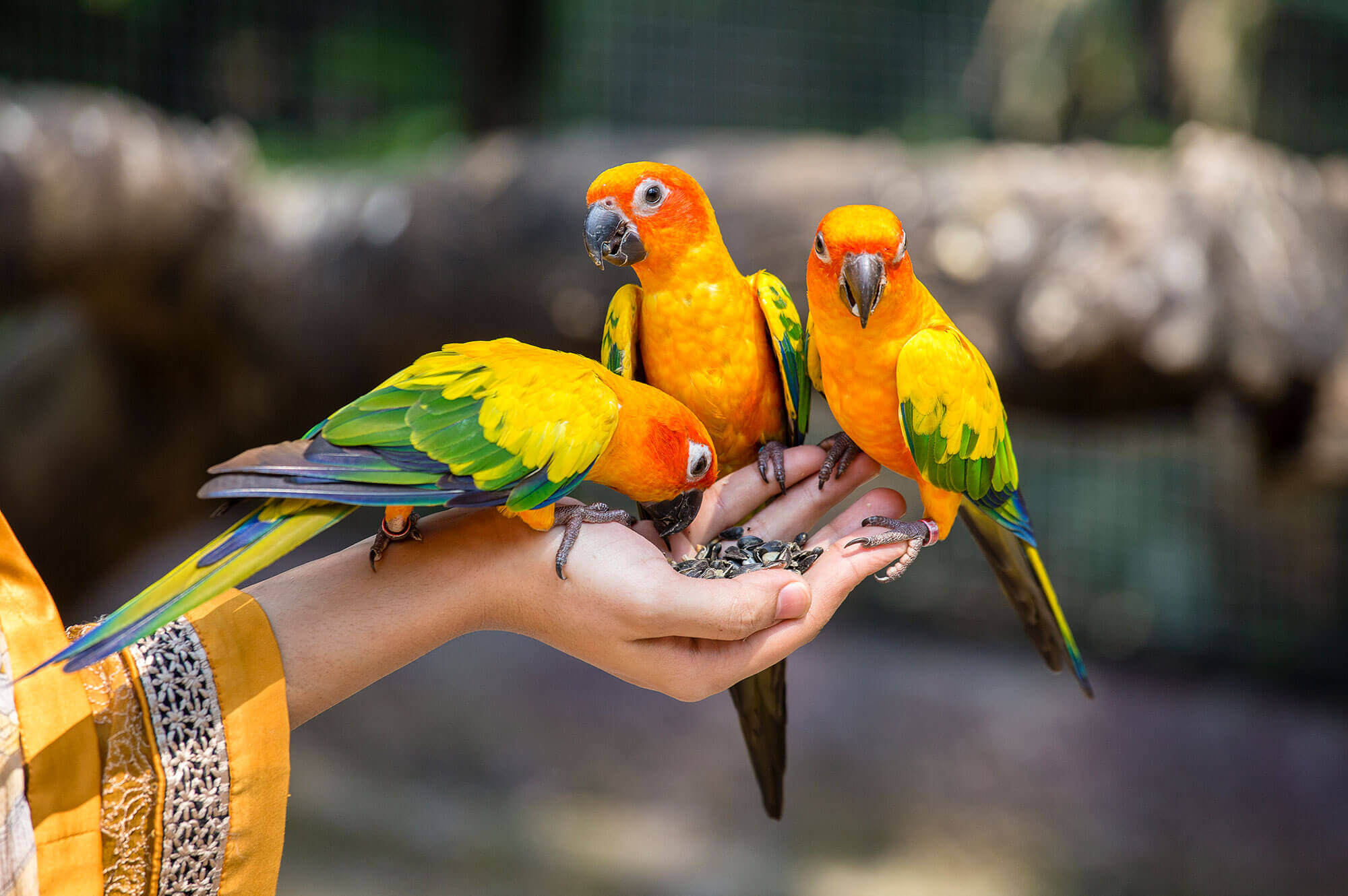 colorful birds in a hand